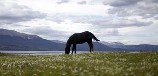 Post de Cómo despedirte de tu caballo a su muerte: crece el interés por la incineración individual