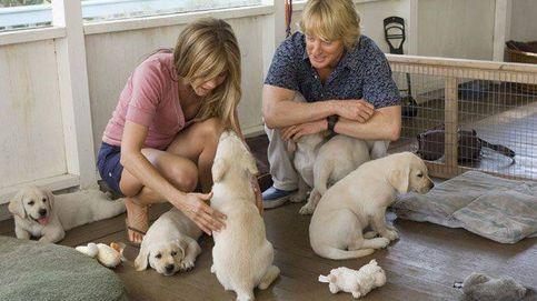 Por qué la gente con perros es más feliz que la gente con gatos