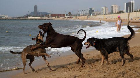 Los perros son el mejor amigo del hombre desde hace 20.000 años