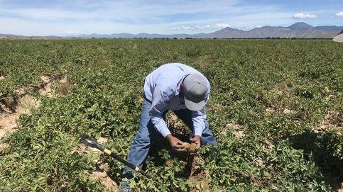 Nuestra agricultura tradicional, en la encrucijada