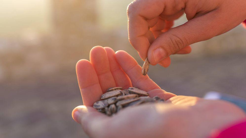 Foto: Comer pipas y tirar las cáscaras al suelo puede ser motivo de una multa de 750 euros en Getafe