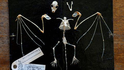 Encuentran en Bélgica el murciélago más antiguo hasta la fecha: 33 millones de años