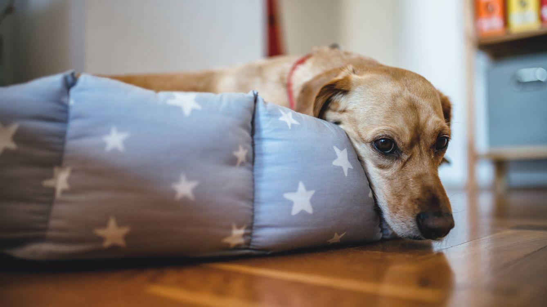 Cómo volver a acostumbrar a tu perro a quedarse solo después del confinamiento