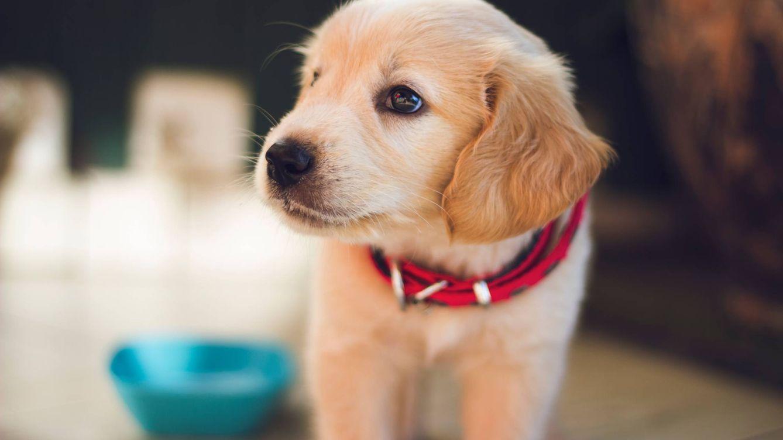 Cuidas tu dieta, pero ¿y la de tu perro? Descubre la dieta BARF