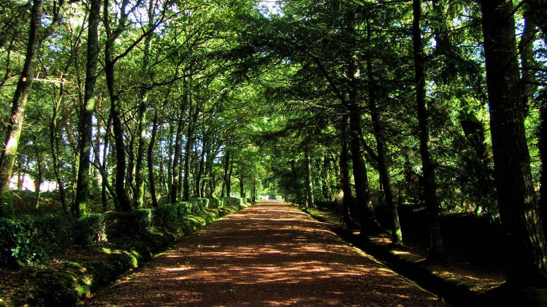 Viajes: Los Ocho Bosques Más Espectaculares Del Mundo