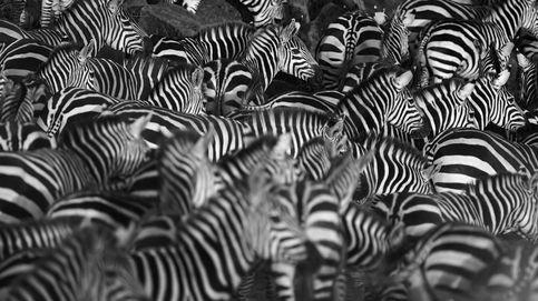 La sorprendente razón por la que las cebras tienen rayas