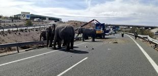 Post de Fallece un elefante y otros dos heridos por el vuelco de un camión en la A-30