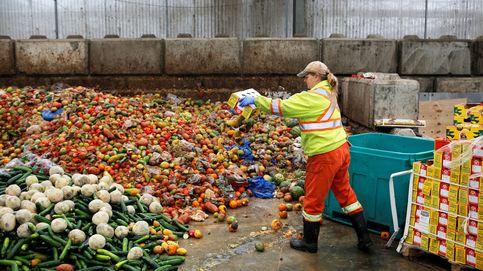 El negocio de 'fabricar' insectos para alimentar el pollo que comes