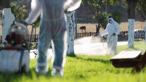 Aumentan a 42 los casos asociados al virus del Nilo, dos más que ayer