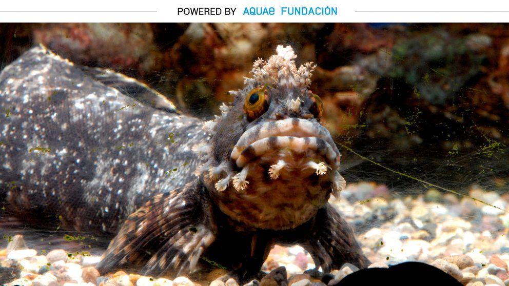 Estas son las especies que pasan el invierno bajo el agua para no tener frío