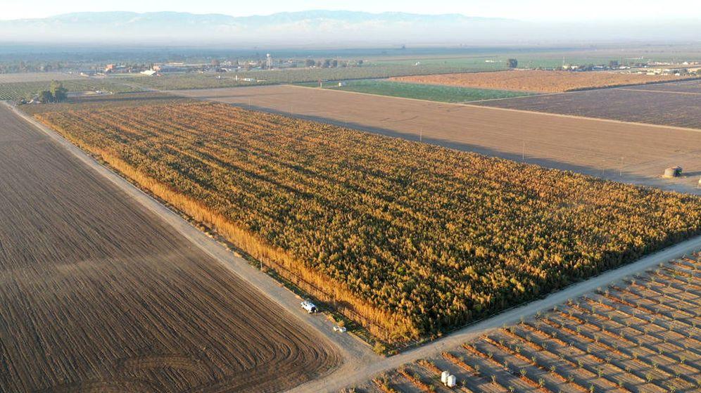 Foto: La plantación, repartida entre 11 campos, ocupaba más de 185 hectáreas (Foto: Facebook/Sheriff Condado Kent)