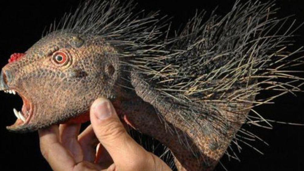 Descubren un nuevo tipo de dinosaurio, el puercoespín vampiro del Jurásico