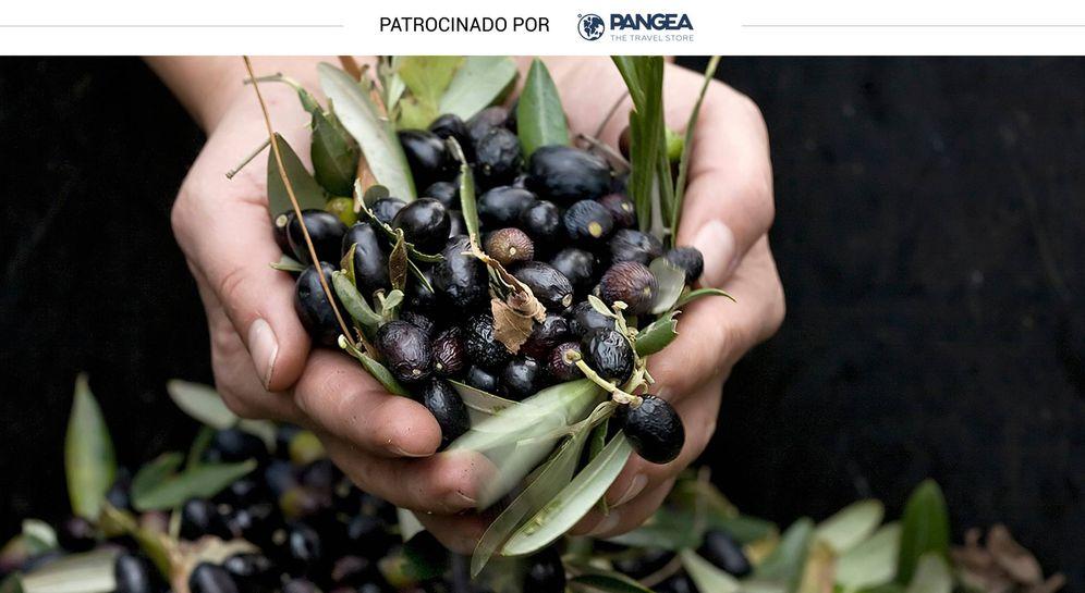 Foto: La aceituna es el fruto del que se extrae el aceite de oliva (iStock)