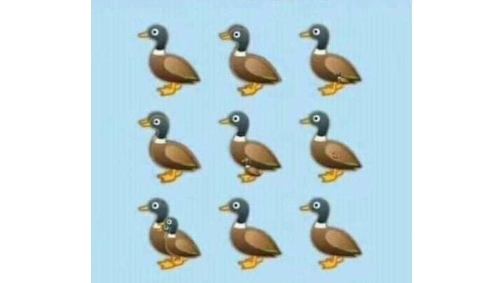 El último acertijo viral: ¿cuántos patos eres capaz de ver en esta imagen?