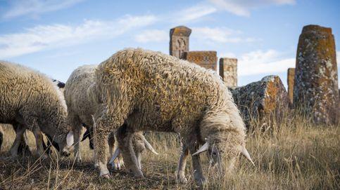 Los entierros en lana: una obligación por ley en la Inglaterra del siglo XVII