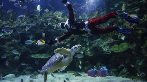 Navidad en el acuario
