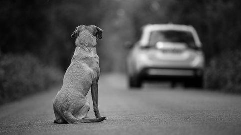 Conciencia y formación: el abandono de mascotas después del confinamiento