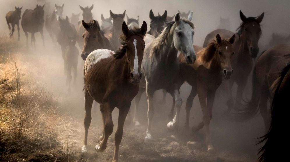 Foto: Más de 300 equinos semisalvajes en Doñana (Julián Pérez / EFE)