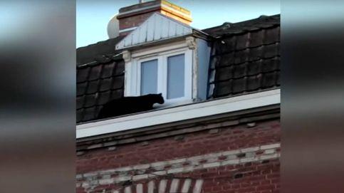Una pantera negra se pasea por un tejado ante las miradas atónitas de los vecinos