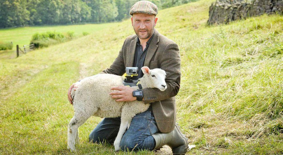 Foto: Sony colocará cámaras en ovejas para seguir el Tour de Francia