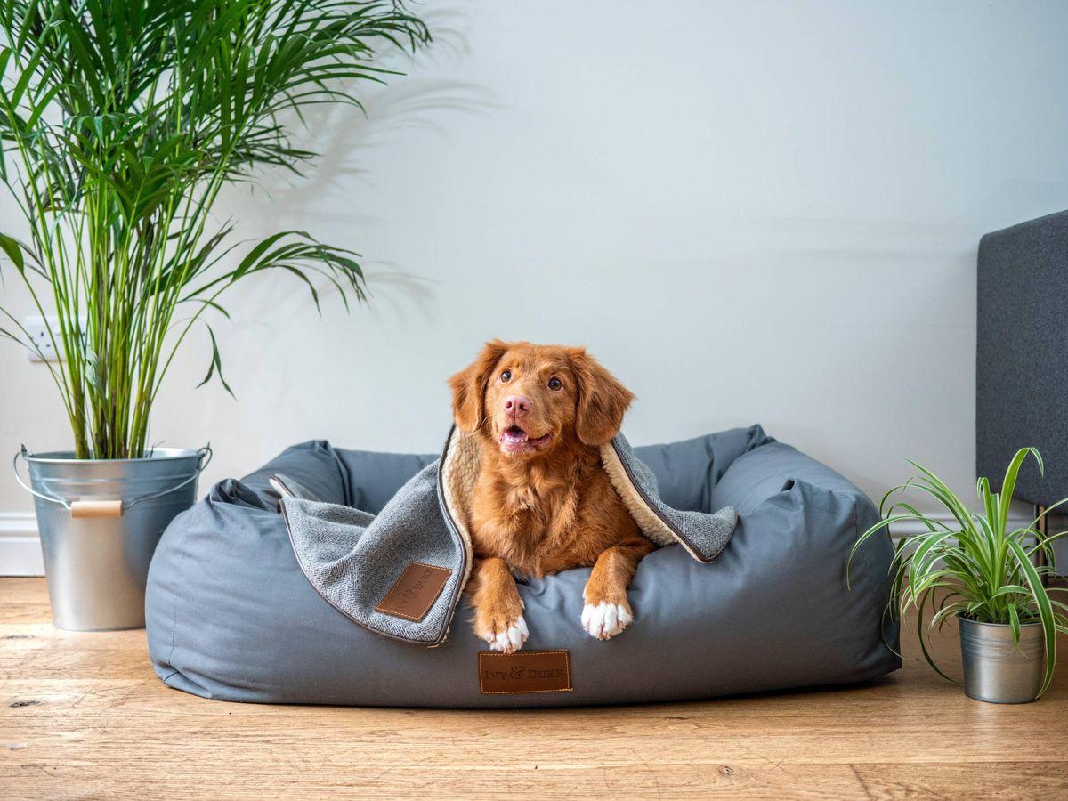 Foto: Consigue en Amazon todo lo que tu perro puede desear. (Jamie Street para Unsplash)