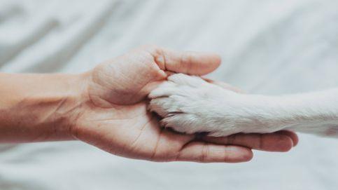 La verdadera razón por la que tu perro te da la pata