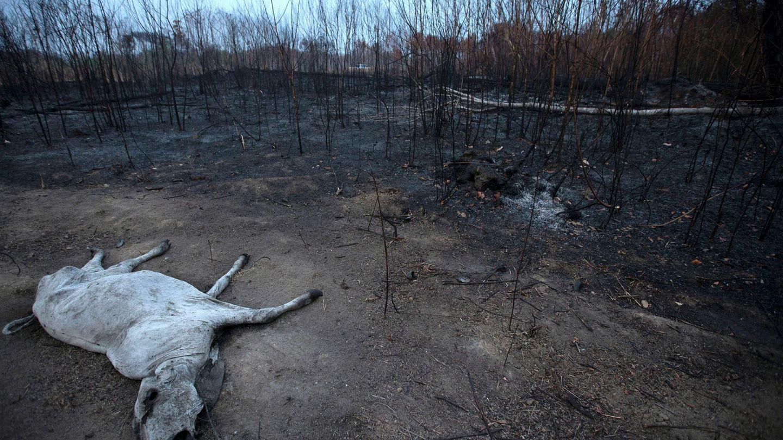 Un ejemplo de deforestación (a través del fuego) en el Amazonas. Foto: EFE