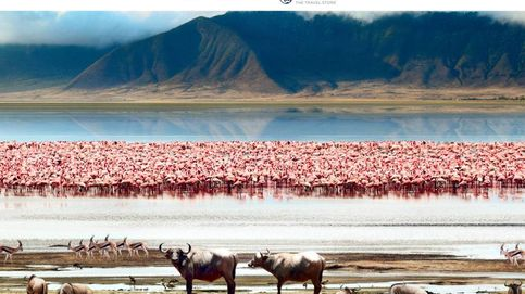 Safari en libertad en la sabana de Tanzania: donde lo salvaje cobra vida