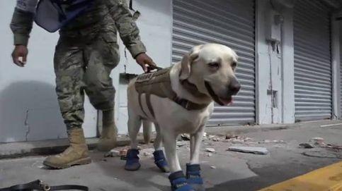 Frida, el perro de la Marina de México, se jubila