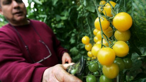 Once países de la Unión Europea prohibirán el cultivo de transgénicos