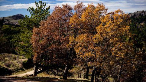 La naturaleza española estrena parque nacional