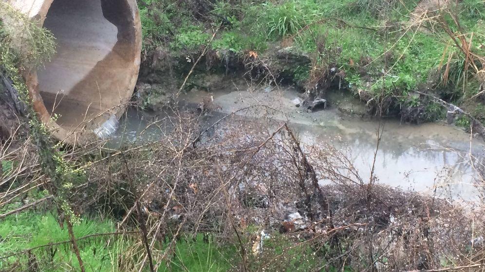 Foto: El final del colector que vierte las aguas fecales al arroyo de Griñón.