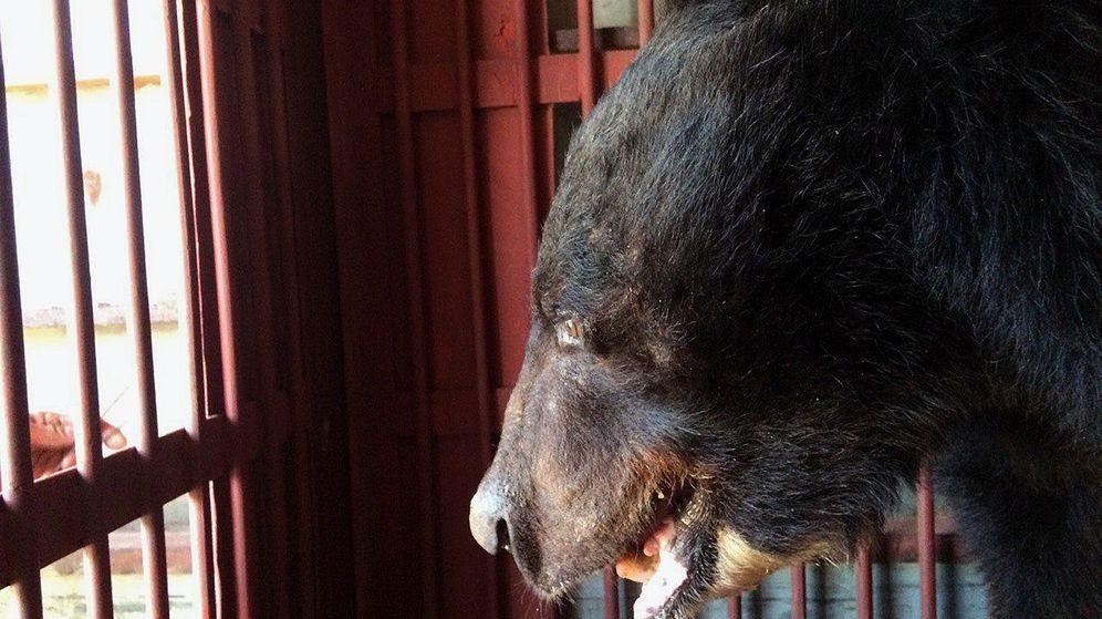 Foto: Oso dentro de una jaula. (EFE)