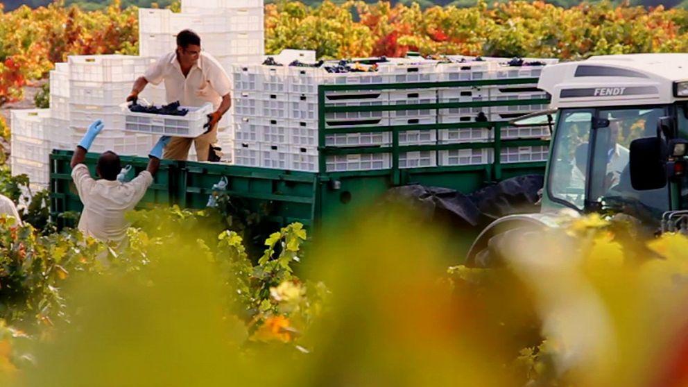 Vega-Sicilia culpa a las bodegas de no moverse y mirar al Gobierno