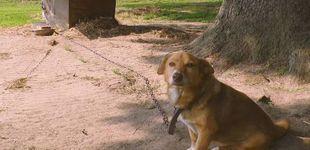 Post de Miss Willie: la perra que pasó 12 años sola y encadenada pero murió feliz