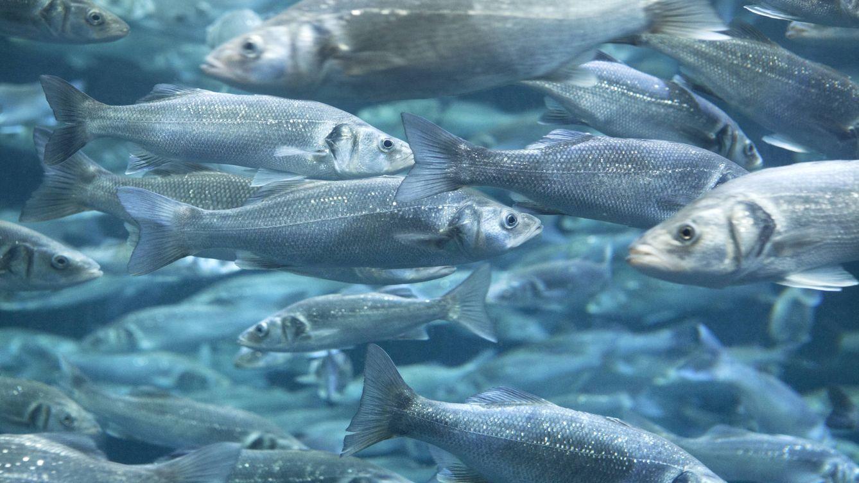 Acuicultura: cómo salvar los océanos y servir nuestra mesa a la vez