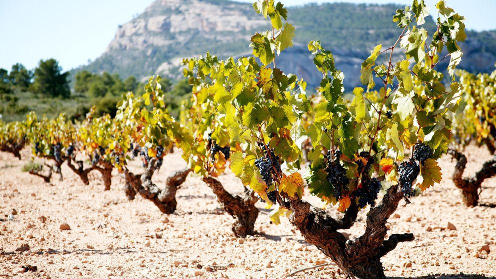 Castaño vuelve a reinventarse con nuevos vinos finos y elegantes
