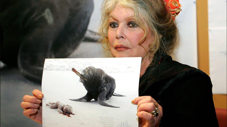 Foto: Brigitte Bardot en una campaña contra la caza de focas (Gtres)