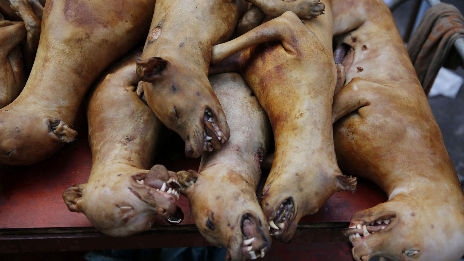 Noticias de China: Así es el polémico festival de carne de perro ...