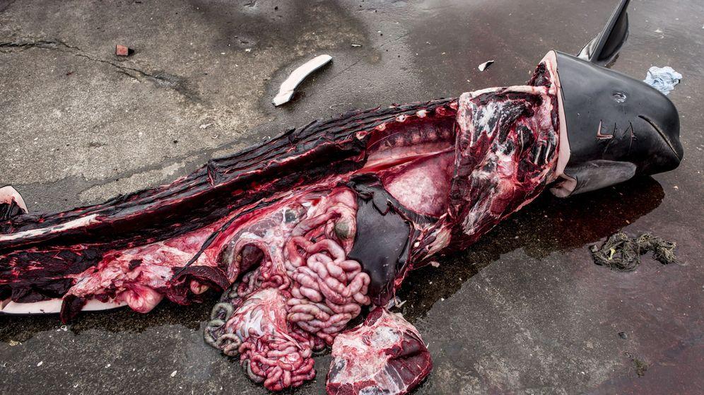Foto: La caza de ballenas es legal en las Islas Feroe (EFE/Mads Claus)