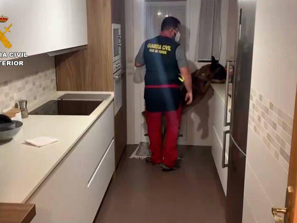 Foto: Un agente con un perro entrenado inspecciona una de las viviendas registradas. (Guardia Civil)