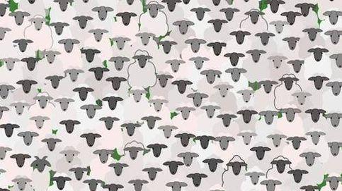 El último acertijo visual: ¿puedes encontrar la cabra entre las ovejas?