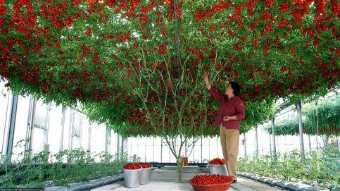 Flores explosivas, plantas que donan sangre y otros ejemplos de botánica insólita