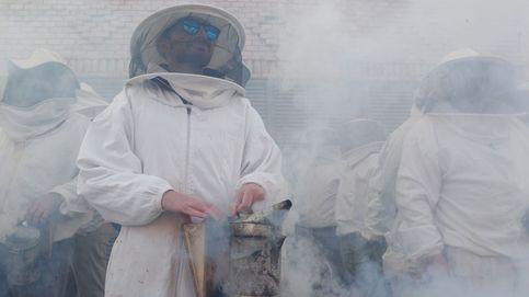 Protestas de los apicultores en Valencia