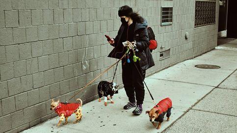Hay ciudades españolas que no multan por dejar las heces de perro en la calle