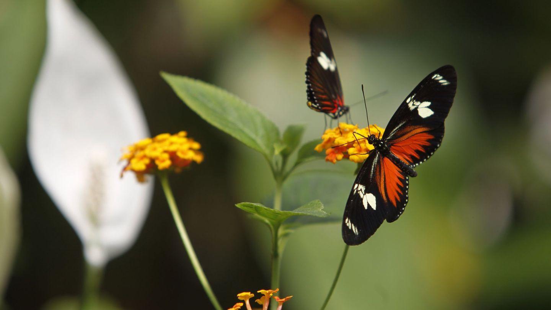 Desarrollo económico y conservación de la naturaleza son perfectamente compatibles. (EFE)