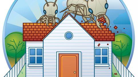Compré un piso usado y he descubierto que hay termitas,  ¿puedo reclamar?