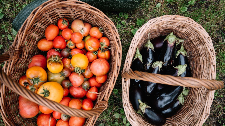 tomates y berenjenas