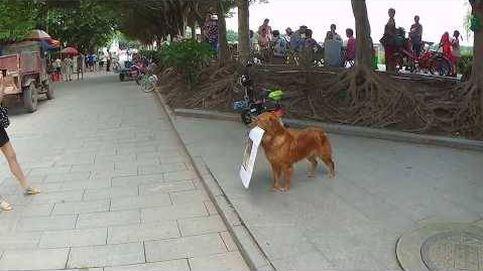 Un perro promociona un bar en China