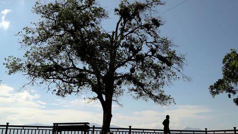 Dos septuagenarios cortan por la mitad un árbol de su vecino y se vuelve viral